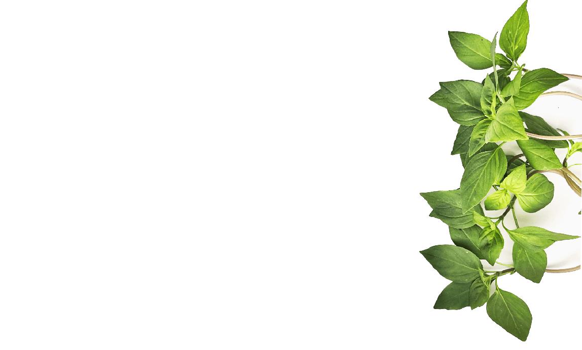 Bazalka thajská